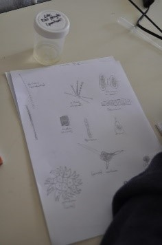 plancton 3